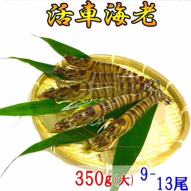 熊本県産 活き 車海老 350g (大)(9-13尾)【大サイズ厳選品】A5ランク【 お歳暮 、贈り物に】【 送料無料 】とれたての車エビから大きい物