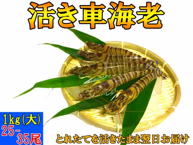 熊本県産 活き 車海老 1kg (大) (25-35尾)【大サイズ厳選品】A5ランク【 お歳暮 、贈り物に】【 送料無料 】とれたての車エビから大きい