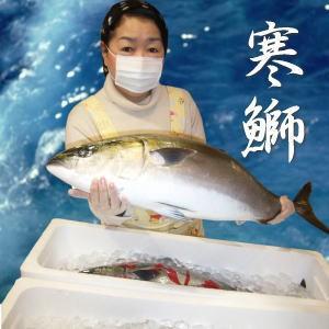 【送料無料】豊漁のお陰で最安値に挑戦中!天然寒ぶり半身(5kgの半身)旨いぶり!ぶりしゃぶ 刺身 安心の業務用食品包装ラップ、鮮度
