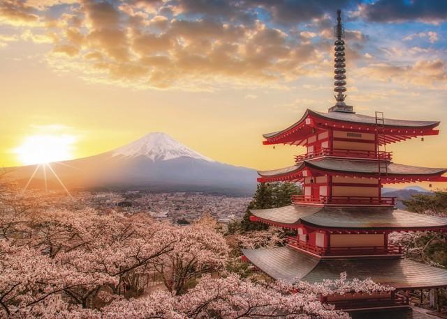 春暁の富士山と桜(山梨) ジグソーパズル 風景 500ピース 38×53cm