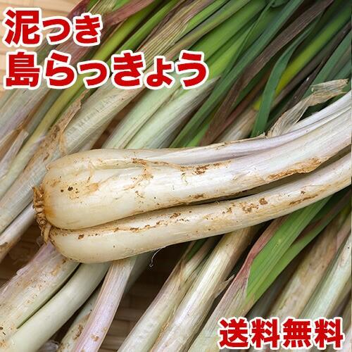 島らっきょう沖縄県産 2kg 送料無料! 今なら200gオマケ付き!たっぷり買うなら絶対お得! 沖縄野菜(らっきょう 生 国産) 天ぷらや漬物、