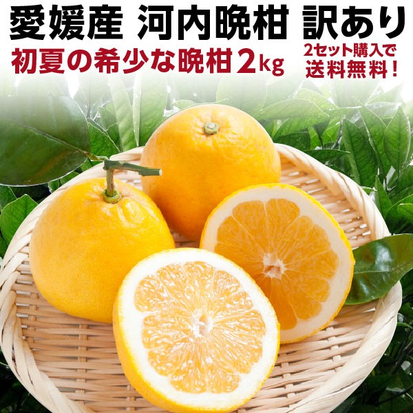 河内晩柑 愛媛産 訳あり 和製グレープフルーツ 初夏のフルーツ 2kg