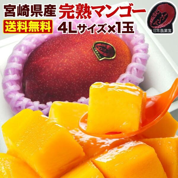 母の日 ギフト マンゴー ポイント10% 宮崎 完熟 ご自宅用でも 完熟マンゴー超特大4L玉(510g以上) JA西都協賛 光センサー完全選果 mango