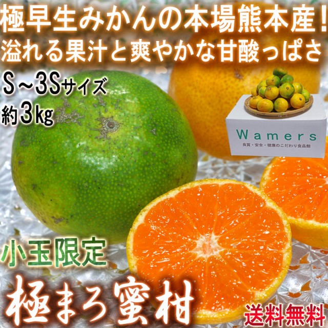 極まろ蜜柑 グリーン温州みかん 約3kg S〜3Sサイズ 小玉限定 熊本県産 極早生ミカンの聖地、熊本産!緑の果実に爽やかな甘さ