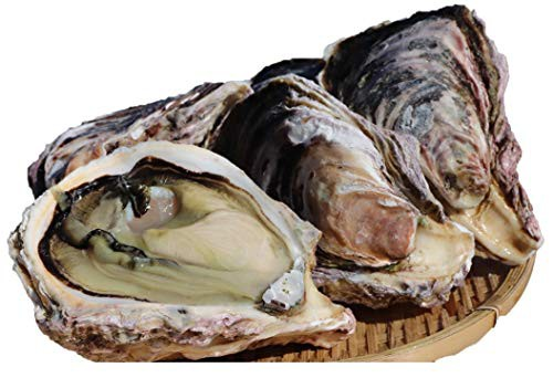 宮崎県産 幸徳丸の細島岩牡蠣(生食)3kg(9個?10個)LLサイズ ☆300g以上の特大岩牡蠣をご堪能!贅沢BBQやギフトにもどうぞ!