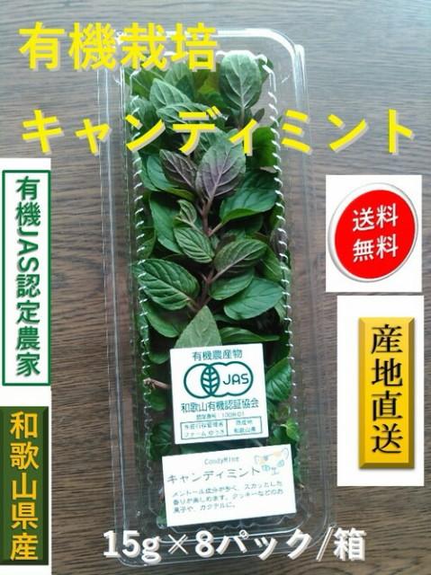 【熊本県産】【送料無料】あさぎり町花咲たもぎ茸 「極 -kiwami-」錠剤240粒(48g)×6袋セット