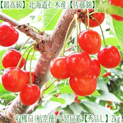 【送料無料】北海道産 さくらんぼ 佐藤錦 L 2kg(1kg×2 仁木産 お中元 秀品バラ手詰め)北海道品評会最優秀農園産なので品質は最高!