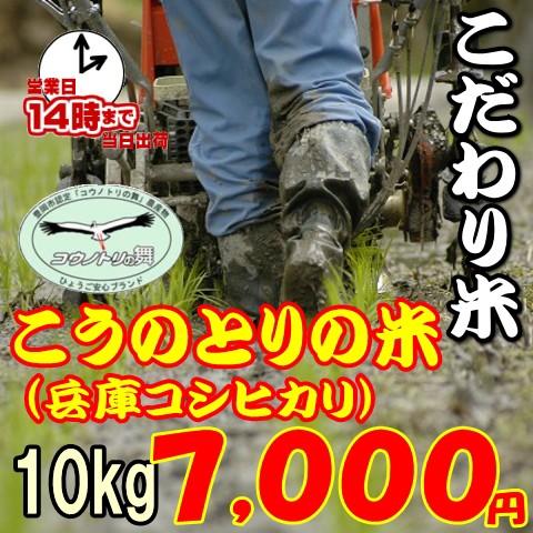【こだわり米】こうのとりの米 10kg(兵庫県豊岡市産コシヒカリ) お米/送料無料/特別栽培米/程よい味