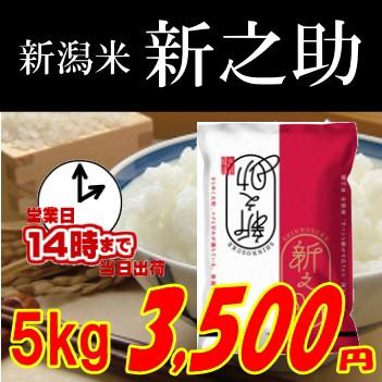 令和元年新潟 新之助5kg 玄米 白米 分搗き選択可能