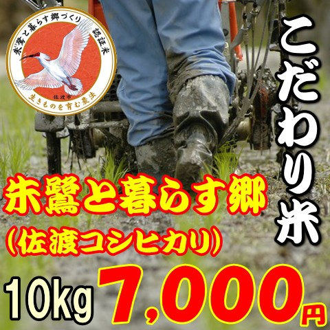 【こだわり米】佐渡コシヒカリ 朱鷺と暮らす郷10kg お米/送料無料/程よい味