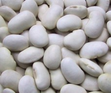 【事業所配送(個人宅不可)】 白花豆 25kg (北海道産)