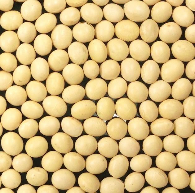 北海道産 大豆 500g (北海道産とよまさり)