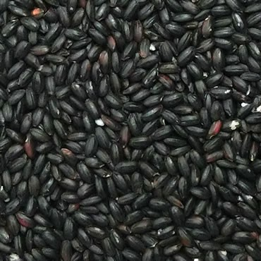 古代米 黒米 30kg (令和元年産 山梨県)長期保存包装済み
