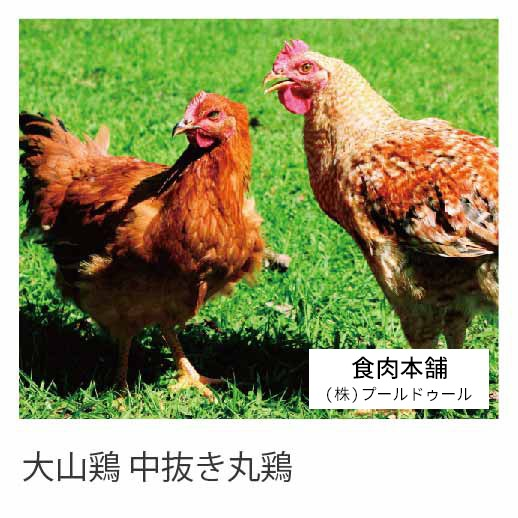 国産鶏肉 銘柄鶏 大山鶏 中抜き丸鶏 1羽 約1kg〜1.2kg ホール 冷蔵品 業務用