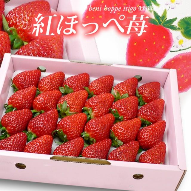 紅ほっぺ(約700g)愛媛/徳島産 紅ほっぺ苺 贈答用 ギフト 化粧箱 いちご 苺 イチゴ 食品 フルーツ 果物 いちご 送料無料