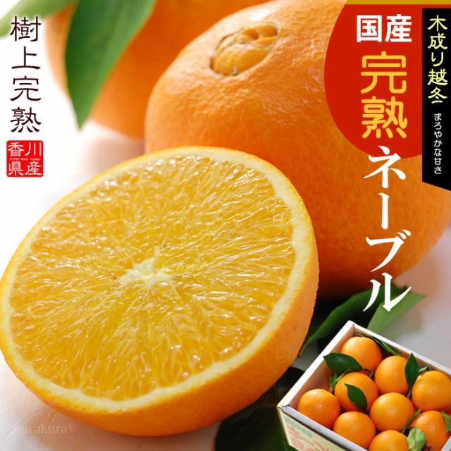 越冬完熟葉付きネーブルオレンジ(5kg)香川産 国産オレンジ ネーブル オレンジ 柑橘 送料無料
