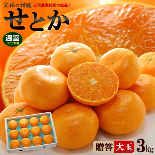 ハウスせとか2-3L(3kg)愛媛/佐賀産 秀品 贈答 ギフト せとか みかん ハウス 瀬戸香 柑橘 食品 フルーツ 果物 みかん せとか 送料無料