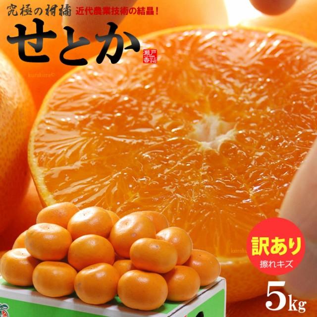 訳ありせとか(約5kg)愛媛産 せとか みかん せとか訳あり せとか 5kg 柑橘 瀬戸香 食品 フルーツ 果物 みかん せとか 送料無料