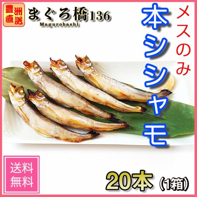 子持ち本ししゃも 北海道産 ギフト 豊洲 シシャモ 柳葉魚 メス 20尾 お取り寄せ SALE ご当地