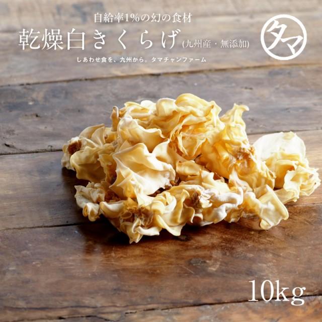 【送料無料】無農薬 乾燥 白きくらげ 10kg ぷりぷりコリコリの国産キクラゲ 豊富なビタミンDとビオチン。まさに食べる美容食。