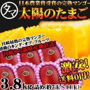 太陽のタマゴ 3.8kg詰め 最高級 マンゴー フルーツ 宮崎 果物 香り 糖度 プレミアム ギフト プレゼント 父の日 送料無料 お中元