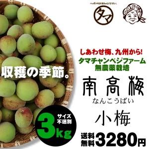 もぎたて南高梅(小梅〜Sサイズ)3kg 送料無料 タマチャンべジファーム無農薬栽培の新鮮(生)うめ 青梅