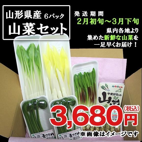 【予約商品】やまがた山菜セット★ひと足早い春の味覚をお届け!