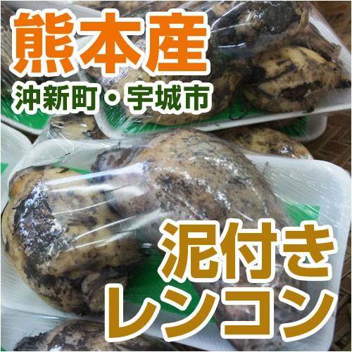 熊本県産 泥付きレンコン 1パック(約300g) 【 野菜セット と同梱で送料無料 】【 九州 野菜 れんこん 蓮根 根菜 】