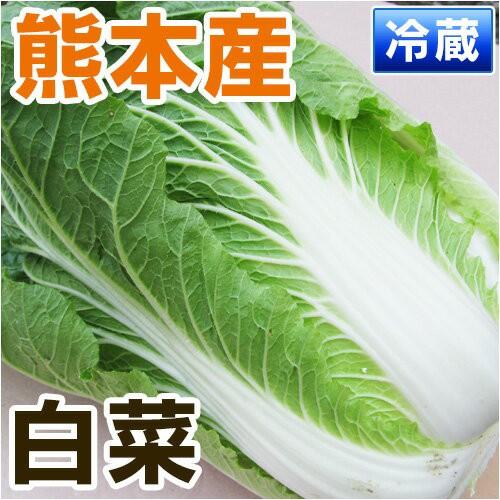 熊本産 白菜 1玉 【 野菜セット 同梱で送料無料 】【 九州 熊本 野菜 はくさい ハクサイ 葉 緑 鍋 漬物 】