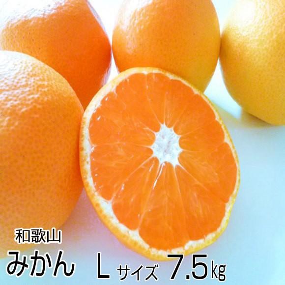 【送料無料】紀州産 高糖度のとろける美味しさ!温州みかん Lサイズ7.5kg(約60個)【和歌山みかん】