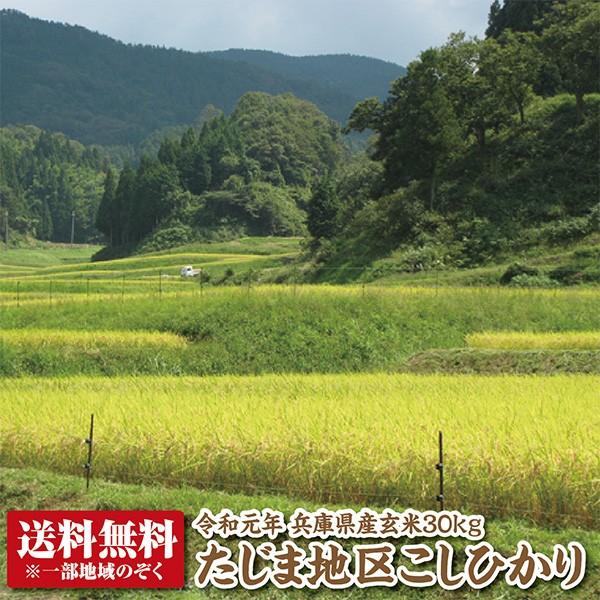 【令和元年産】兵庫県たじまコシヒカリ玄米30kg【送料無料】【こしひかり】【精米料無料】