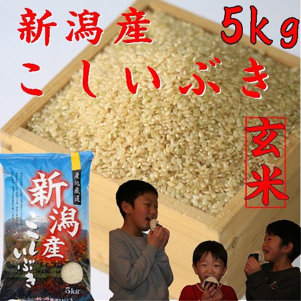 【新米 玄米】【新米 玄米5kg】【新潟県産】こしいぶき5kg 《新米 令和2年 玄米5キロ お米5kg 2020年 安い玄米5キロ 美味しいお米》
