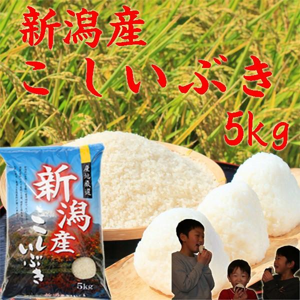 【新米 5kg】新潟産 こしいぶき 5kg《新米 令和2年 2020年産 白米 分づき お米 5kg 安い 5キロ 美味しいお米 新潟産米》