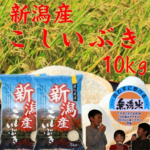 【新米 無洗米 10kg】新潟産 こしいぶき 無洗米10kg(5キロ×2袋)《新米 令和2年 無洗米10キロ お米10kg 安い米 美味しいお米》