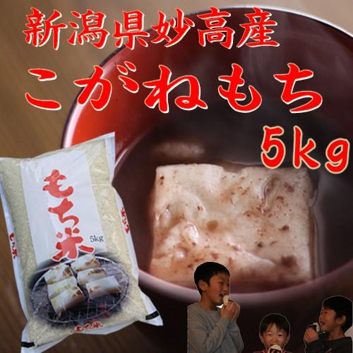 新米【令和2年 もち米】新潟産こがねもち 白米 5kg(5キロ×1袋)【餅米です】《令和2年 2020 お米 5kg 5キロ もち米 新潟県産もち米》