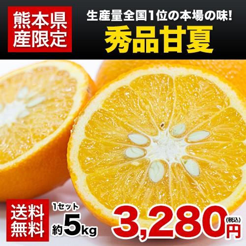 秀品 甘夏 みかん 5kg 送料無料 3L-Sサイズ 熊本県産 柑橘 ギフト 贈答 フルーツ 果物 あまなつ 7-14営業日以内に出荷予定 土日祝日除く