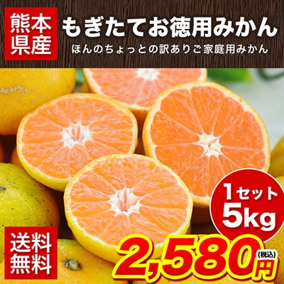熊本 もぎたて お徳用 みかん 5kg ちょっと訳あり 送料無料 家庭用 果物 10月中旬-11月上旬より順次出荷予定(土日祝除)