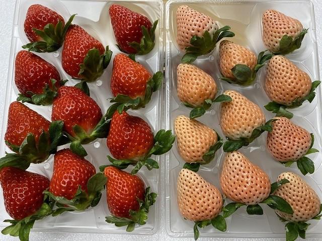 白いちご「淡雪」&赤いちご「さがほのか」食べくらべセット イチゴ 苺 送料無料 ギフト 産地直送 佐賀県産