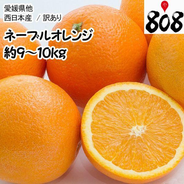 【西日本産】訳あり ネーブルオレンジ 大きさおまかせ 風袋込 約9〜10kg【常温便送料無料】(北海道沖縄別途送料加算)木成り完熟/訳有