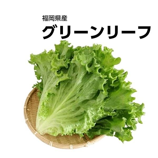 【福岡県産】グリーンリーフ 1パック【野菜詰め合わせセットと同梱で送料無料】【送料別】