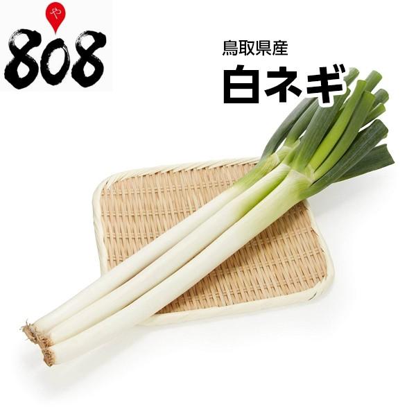 【鳥取県産】白ネギ 1束 約400g【野菜詰め合わせセットと同梱で送料無料】【送料別】