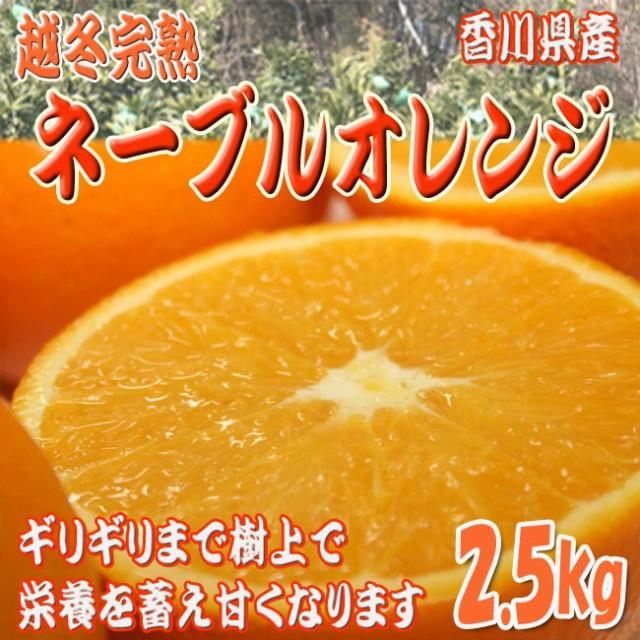 【送料無料】越冬完熟ネーブルオレンジ 2.5kg以上(9〜11玉) [香川県産] 本来のネーブル味を試して♪ 柑橘類 フルーツ 通販 果物 [大阪常