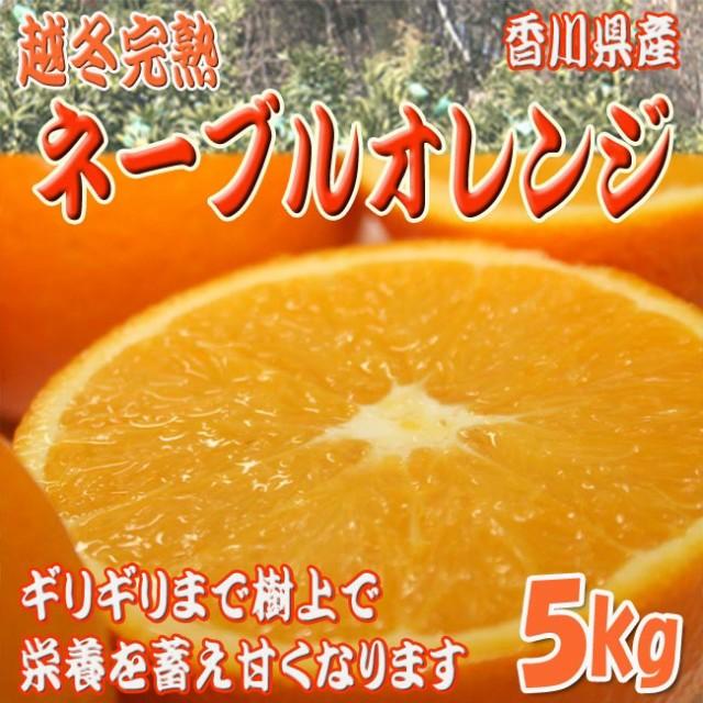 【送料無料】越冬完熟ネーブルオレンジ 5kg以上(18〜21玉) [香川県産] 本来のネーブル味を試して♪ 柑橘類 フルーツ 通販 果物 [大阪常
