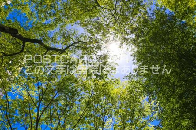 【日本の風景/東京のポストカード】東京都新宿区西新宿ビル群の緑はがきハガキ photo by MIRO