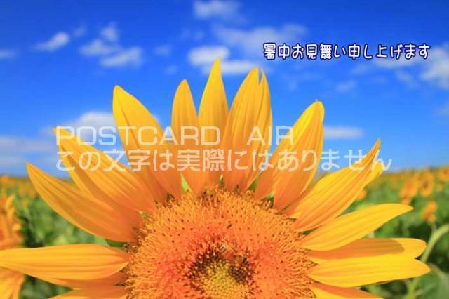 【限定夏の挨拶ポストカード】「暑中お見舞い申し上げます」向日葵 ひまわりと青い空のハガキはがき絵葉書