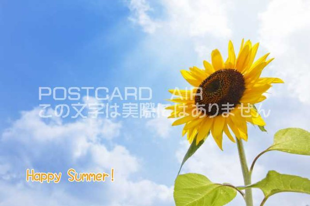 【限定夏の御礼ポストカード】「Happy Summer 」向日葵ひまわりのハガキはがき絵葉書