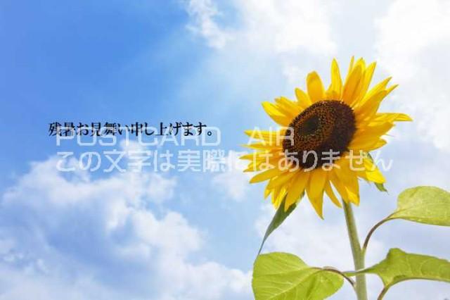 【限定夏の残暑見舞いポストカード】「残暑お見舞い申し上げます。」一輪の向日葵ひまわりの葉書 はがきハガキ