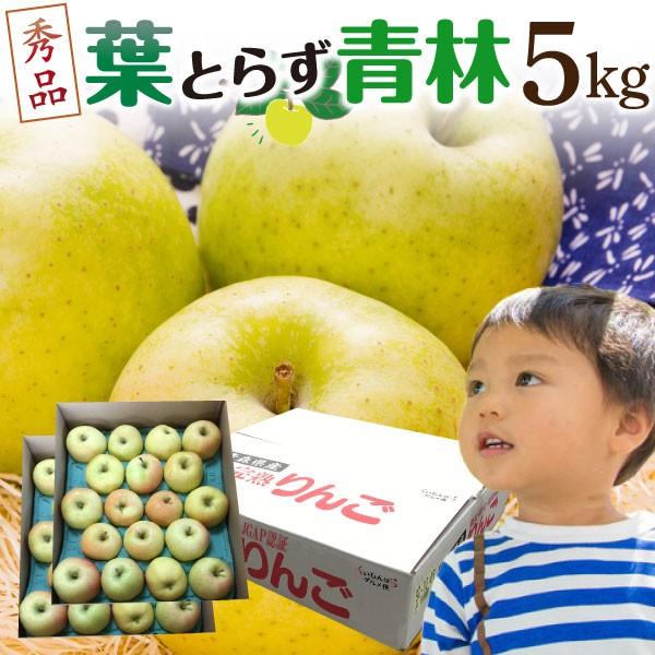 青りんご リンゴ 青林 青森 葉とらず 贈答用5kg 16〜23玉 送料無料 フルーツ お誕生日 内祝い プレゼント 秀品 産直