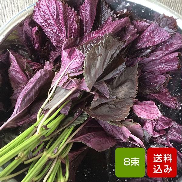 赤しそ 2kg 8束 枝付き 梅干し用 しそジュース用 福岡県芦屋産