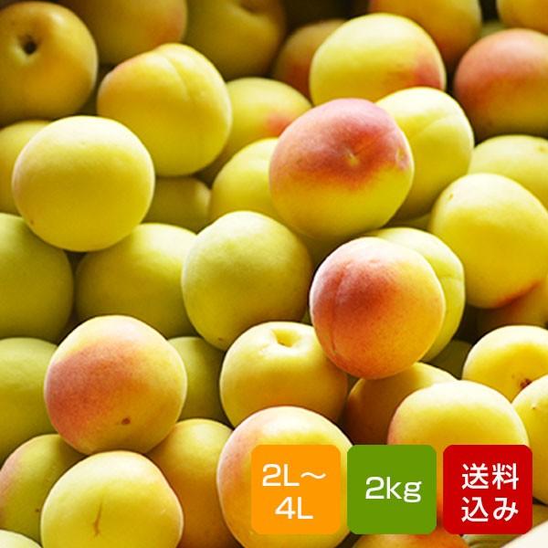 南高梅 完熟 梅干し用 2kg 2L〜4L 完熟南高梅 梅酒用 梅 大分産 ご予約品